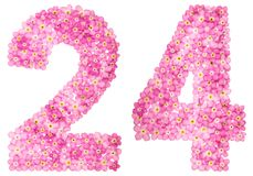 Arabic numeral 24, twenty four, from pink forget-me-not flowers,. Isolated on white background Stock Photos