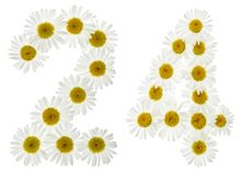 Arabic numeral 24, twenty four, from white flowers of chamomile, isolated on white background stock photo