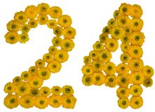Arabic numeral 24, twenty four, from yellow flowers of buttercup. Isolated on white background royalty free stock photos