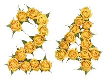 Arabic numeral 24, twenty four, from yellow flowers of rose, iso. Lated on white background royalty free stock images