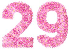 Arabic numeral 29, twenty nine, from pink forget-me-not flowers,. Isolated on white background Royalty Free Stock Photography