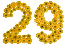 Arabic numeral 29, twenty nine, from yellow flowers of buttercup. Isolated on white background Stock Photos