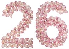 Arabic numeral 26, twenty six, from flowers of hydrangea, isolated on white background royalty free stock images
