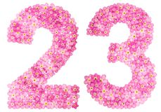 Arabic numeral 23, twenty three, from pink forget-me-not flowers. Isolated on white background Royalty Free Stock Photos