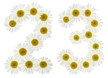 Arabic numeral 23, twenty three, from white flowers of chamomile. Isolated on white background Stock Photo