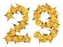Arabic numeral 29, twenty nine, from yellow flowers of rose, iso. Arabic numeral from yellow flowers of rose, isolated on white background royalty free stock image