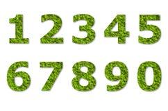 Arabic numeric of green lichen Stock Image