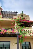 The arabic style villas in luxury hotel with Bougainvillea Royalty Free Stock Images