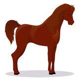 Arabic thoroughbred horse. Vector illustration Royalty Free Stock Photography