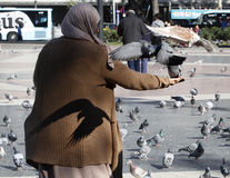 An arabic woman feeds pigeons in Catalonia square in Barcelona. Stock Images