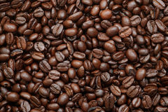 arabica έναρξη ημέρας καφέ φασολιών όπου Στοκ Φωτογραφίες