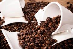arabica καφές βόρεια αγροτική Ταϊλάνδη Στοκ Εικόνα