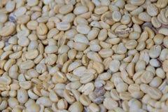 arabica φασόλια καφέ στα φασόλια κοχυλιών Στοκ Εικόνα