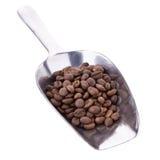 Arabica φασόλια καφέ στο κουτάλι αργιλίου στο άσπρο υπόβαθρο Στοκ φωτογραφία με δικαίωμα ελεύθερης χρήσης