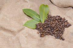 Arabica coffee beans in a burlap bag.  Stock Photo