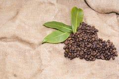 Arabica coffee beans in a burlap bag.  Stock Photos