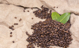 Arabica coffee beans in a burlap bag.  Royalty Free Stock Image