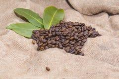 Arabica coffee beans in a burlap bag.  Royalty Free Stock Photos