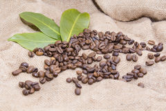 Arabica coffee beans in a burlap bag.  Stock Images