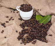 Arabica coffee beans in a burlap bag. Grain coffee mugs on a background of the bag. Green leaves of coffee Royalty Free Stock Photography