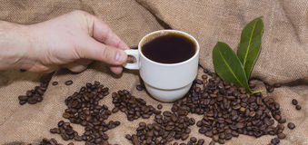 Arabica coffee beans in a burlap bag. Grain coffee mugs on a background of the bag. Green leaves of coffee Stock Photography