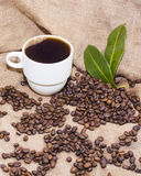 Arabica coffee beans in a burlap bag. Grain coffee mugs on a background of the bag. Green leaves of coffee Stock Image
