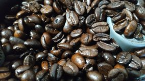 Arabica coffee beans is fesh for you everymoring. You can drink coffe fresh everywhere royalty free stock photo