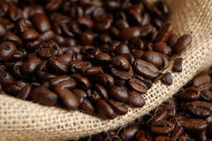 Arabica coffee beans. Medium roasted Arabica coffee beans close up shot in small sack Stock Photography