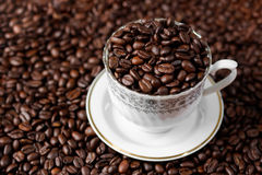 Arabica coffee beans. Medium roasted Arabica coffee beans inside classic cup Royalty Free Stock Image