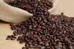 Arabica coffee beans. Medium roasted Arabica coffee beans in sacks Royalty Free Stock Image