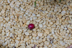 Arabica coffee beans. On shell beans background Stock Images