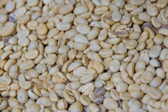 Arabica coffee beans on shell beans Stock Image