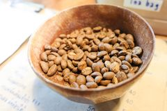 Arabica coffee beans in wooden bowl on table stock image