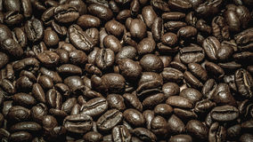 Arabica coffee. Detailed full frame photo of arabica coffee Stock Photography