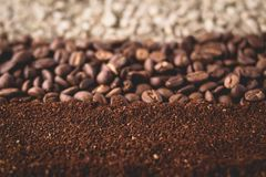 Arabica coffee Steps Coffee Beans Coffee in Asia. Natural light Royalty Free Stock Photo
