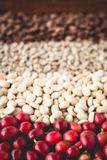 Arabica coffee Steps Coffee Beans Coffee in Asia. Natural light Stock Photo