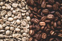 Arabica coffee Steps Coffee Beans Coffee in Asia. Natural light Royalty Free Stock Photography