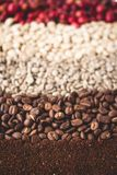 Arabica coffee Steps Coffee Beans Coffee in Asia. Natural light Stock Images