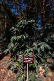 Arabica de bonen van de bessenkoffie op boom in tropisch bos royalty-vrije stock afbeeldingen