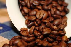 Arabica de Coffea images libres de droits