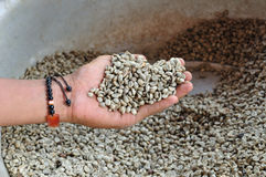 Arabica in hand slabonen. Stock Foto's