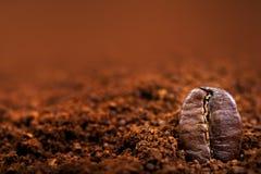 Arabica-Kaffeebohnen Makro auf einem braunen Hintergrundabschluß oben, Makro Stockbilder