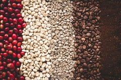 Arabica kawa Kroczy Kawowe fasole Kawowe w Azja Obraz Stock