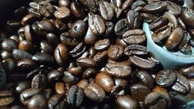 Arabicakaffebönor är fesh för dig som everymoring royaltyfri foto