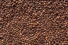 Arabika kawowych fasoli tło zdjęcie royalty free