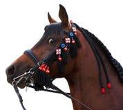 Arabisch die paard op wit wordt geïsoleerd Stock Fotografie