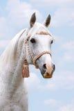 Arabisch hoofd op hemel Royalty-vrije Stock Foto's
