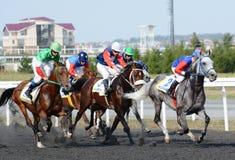 Arabische paarden bij de rassen Stock Afbeeldingen