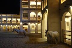 Arabische paarden in Doha Qatar stock fotografie
