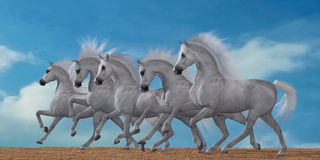 Arabische Paardkudde Royalty-vrije Stock Foto